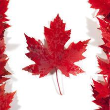 캐나다 유학을 선택하는 이유
