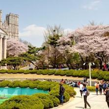 Mendaftar ke Universitas Korea Selatan